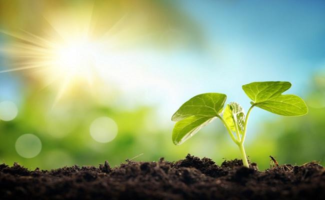 Inilah Penyebab Tumbuhan Selalu Mengalami Pertumbuhan